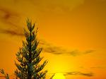 pines_)tree.jpg